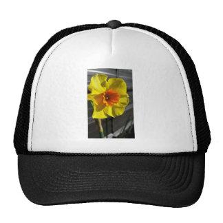 first daffodil cap