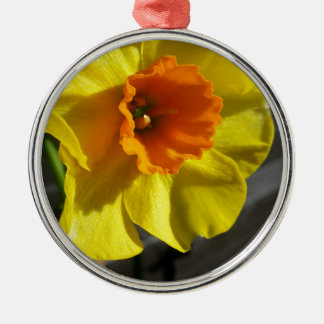 first daffodil Silver-Colored round decoration
