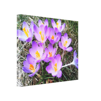 FIRST SIGNS OF SPRING canvas Canvas Print