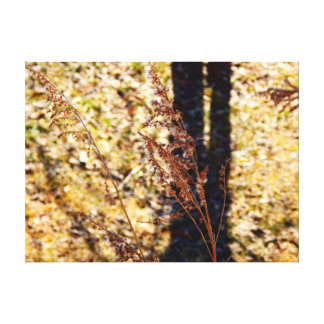 First signs of Spring Canvas Prints
