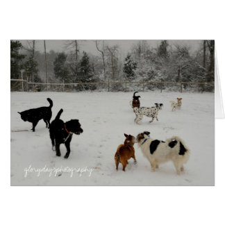 first snow dogs card