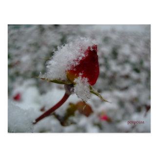 first snow postcard