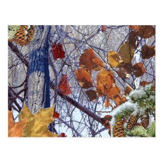 First Snow Winter Camo Print Postcard