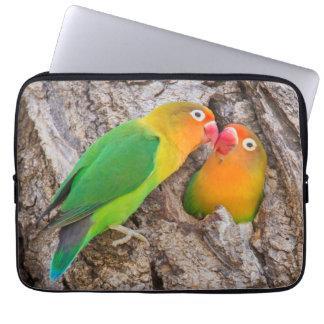 Fischer's Lovebirds kissing, Africa Laptop Sleeve