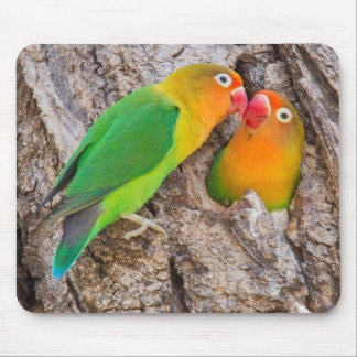 Fischer's Lovebirds kissing, Africa Mouse Pad