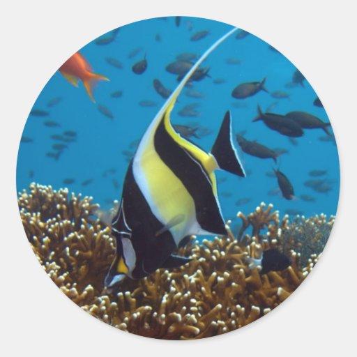 Fish Aquatic animals Round Sticker