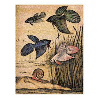 Fish Art Postcard