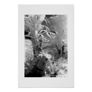 Fish at the Garden of Eden Poster
