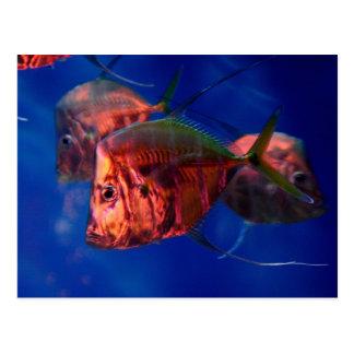 Fish Bathing in Neon Postcard