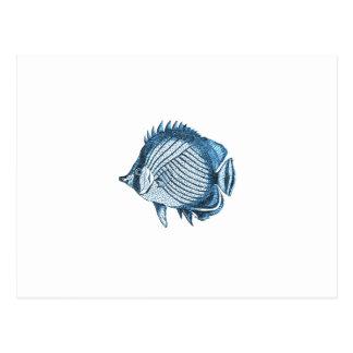 Fish beach nautical ocean coastal sea blue postcard