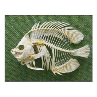 Fish Bone/Wish Bone Postcard