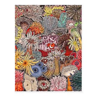 Fish clown and anemones postcard