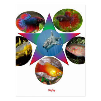 fish,goldfish,carp, fishing, sea, ocean, animal postcard