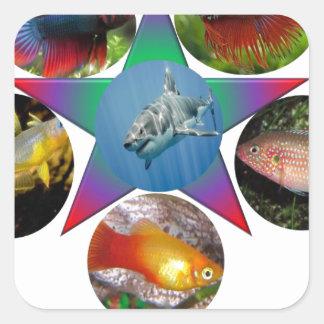 fish,goldfish,carp, fishing, sea, ocean, animal square sticker