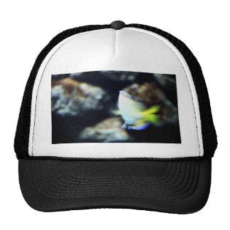 Fish Trucker Hats