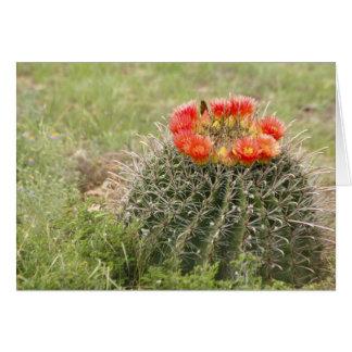 Fish-Hook Barrel Cactus in bloom Greeting Card