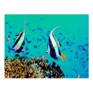Fish in Fiji Waters Postcard
