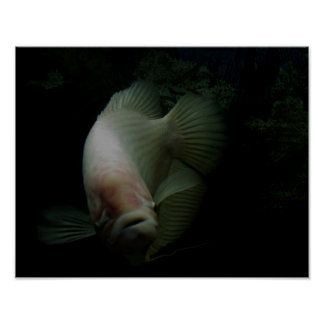 Fish in Tank Poster