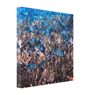 Fish in the Great Barrier Reef Wrapped Canvas