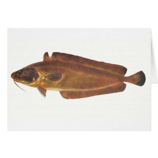 Fish - Ling - Lotella callarias Cards