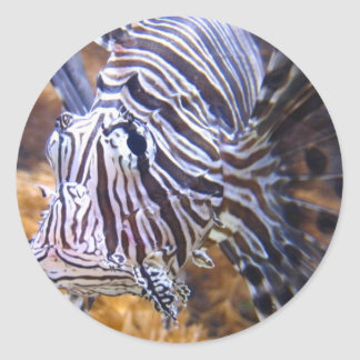 fish,lion fish classic round sticker