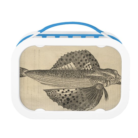 Fish Lunch Box