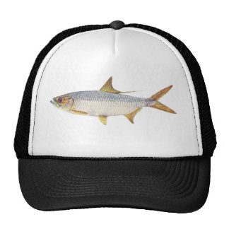 Fish - Ox-Eye Herring - Megalops cyprinoides Trucker Hat