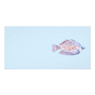 Fish. Red Line Rainbowfish. Photo Cards