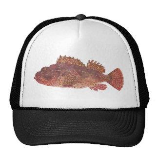 Fish - Red Rock Cod - Scorpaena cardinalis Cap