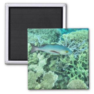 Fish roaming the reef magnet