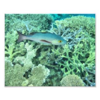 Fish roaming the reef photo print