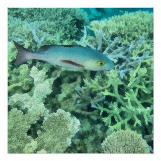 Fish roaming the reef poster