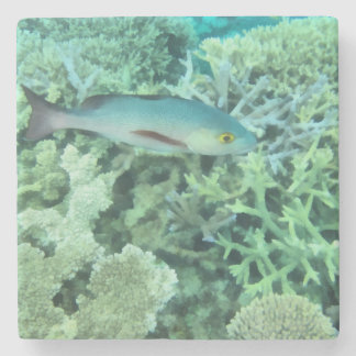 Fish roaming the reef stone coaster