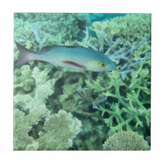 Fish roaming the reef tile