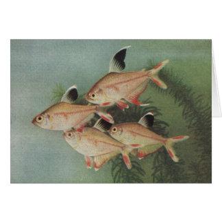 Fish - Rosy Tetra - Hyphessobrycon rosaceus Card