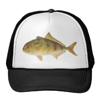 Fish - Samson-Fish - Seriola hippos Cap