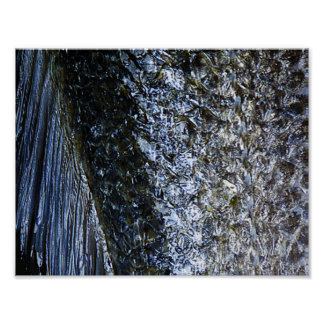 Fish Scales | Poster
