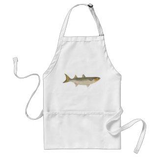 Fish - Sea Mullet - Mugil dobula Aprons