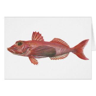 Fish - Sharp-Beaked Gurnard Card