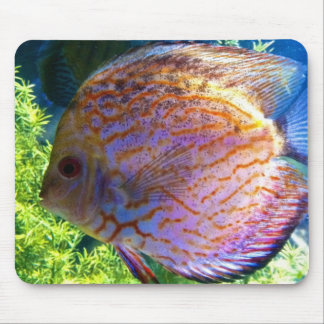 Fish Swimming in Aquarium Mousepad