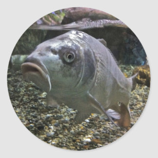 Fish Swimming in Aquarium Sticker