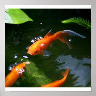FISH TALES   www.debbie-may.fineartamerica.com Poster