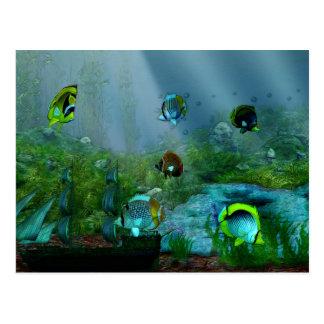 Fish Tank Aquraium Art Post Card