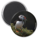 Fisher Puffin Fridge Magnet