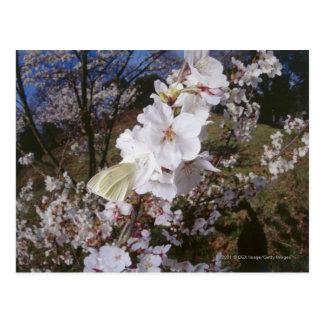 Fisheye view of Butterfly on flower Postcard