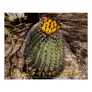 Fishhook Barrel Cactus with Fruit Poster