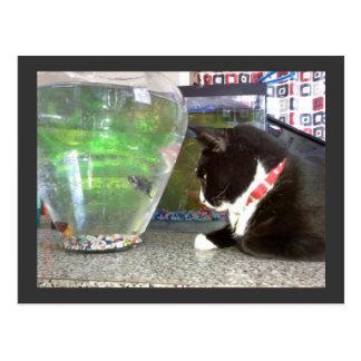 """Fishing Cat Postcard"""" Postcard"