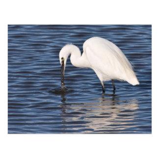Fishing Egret Postcard