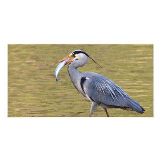 Fishing Grey Heron Photo Cards
