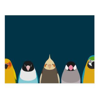 Five birds illustration - tori no iro postcard